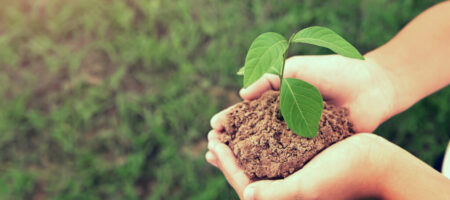 hand holding young plant growing on dirt with green grass backgr